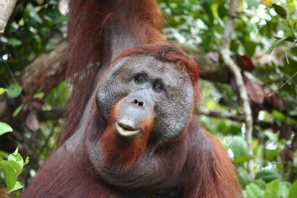 Indonesien Reise - Affe
