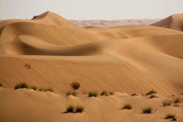 Oman Reise - Wüste