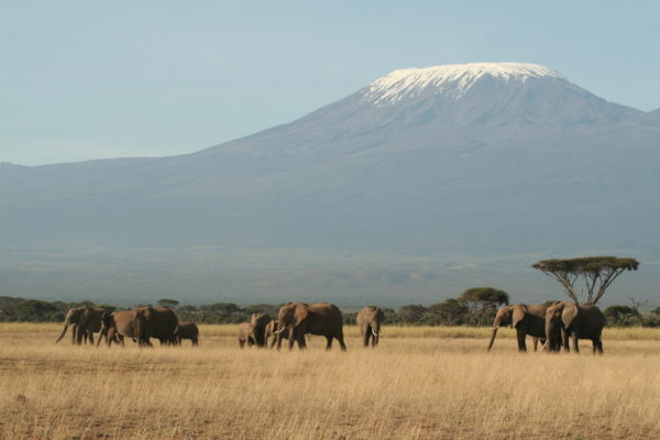 Kilimanjaro- Fern mit Herde