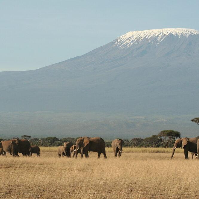 Kilimanjaro Bild 3 (Fern mit Herde)